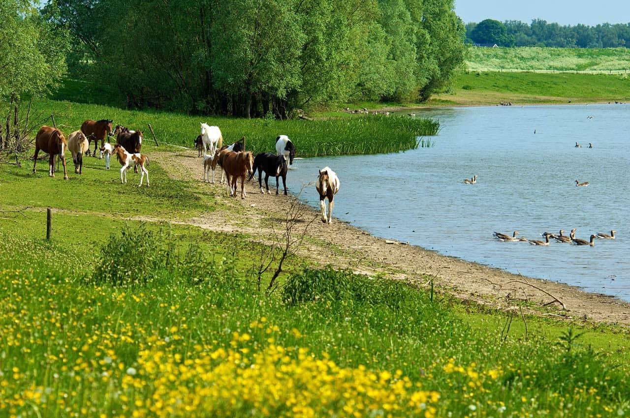 Ruiterpaden Rijnwaarden
